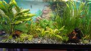 Aquarium 200l mit Unterschrank 100x40x50cm