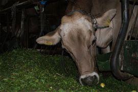 Finanzielle Unterstützung Biobetrieb: Kleinanzeigen aus Mörtschach - Rubrik Wiedersehen
