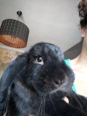 Kaninchen Zuma