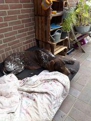 Hundebetreung Hundesitting
