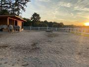 Offenstallplätze für Pony-Wallache
