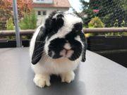 Lucy 3 Jahre kastriert