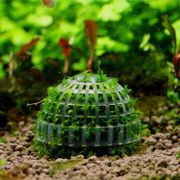 Verschiedene Aquapflanzen
