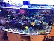 Meerwasser Aquarium 430 l
