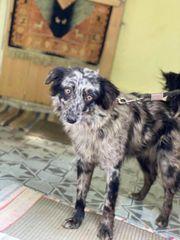 Hundekinder in Not suchen Zuhause