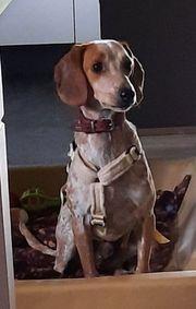 In papenburg zu verschenken hunde Deutscher Schäferhund