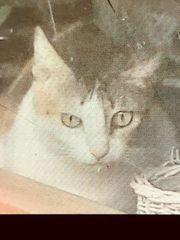 hübsche Katze Jane sucht ein