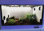 Schmuckhornfrosch mit Terrarium Beheizung