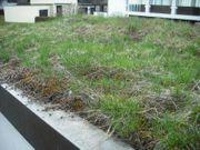 Dachbegrünung Substrat und Bepflanzung