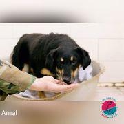 Amal - Bellende Schönheit sucht Futterspender
