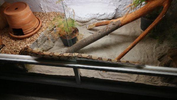 Ich nehme Ihre Reptilien auf
