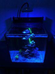 Meerwasser Aquarium Red Sea inkl