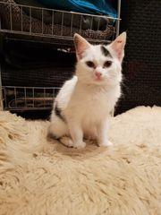Bildschönes Kätzchen sucht liebevolles Zuhause