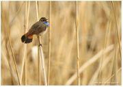 Individuelle Foto-Workshops Wildlife-Fotografie