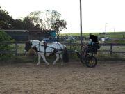 Shetty Pony Kutschengeschirr