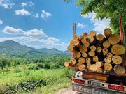Buchen-Brennholz als Stammholz