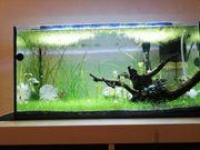 54L Aquarium Gesamtpaket