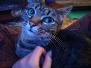 Katze Betsy sucht ein Zuhause