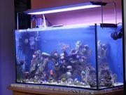 Meerwasseraquarium 200l kurze Laufzeit neue