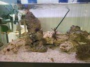 Meerwasseraquarium 60cmx30cmx35cm 60l