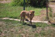 Tierschutzhündin - Lotta -