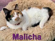 Malicha - 1 5 Jahre alt -