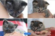 Persermischung Babykatzen