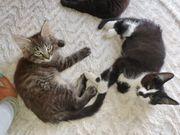Zwei Süße Kitten