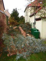 Bad Belzig Baum-Fällung auch stückweise