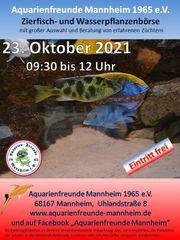 Fiscbörse Aquarienfreunde Mannheim 1965 e