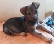 Givoanni - Welpe aus dem Tierschutz -