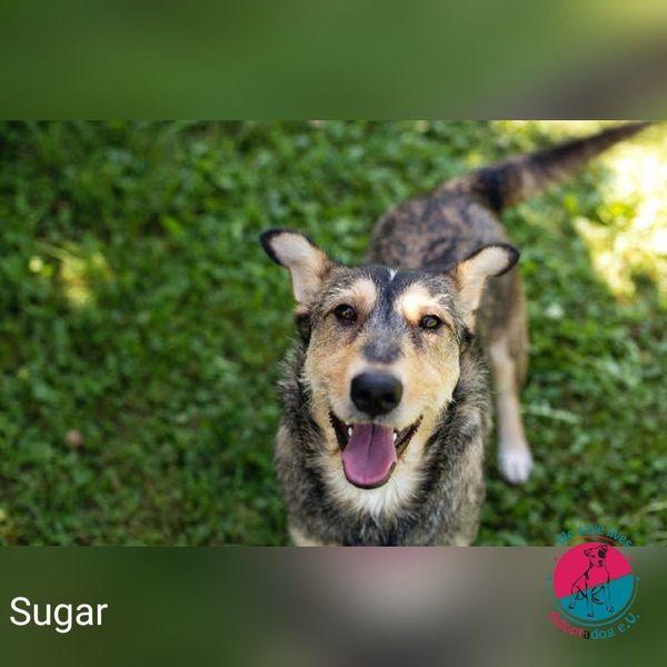 Sugar - es ist Zeit für