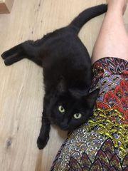 Liebevolles Zuhausegesucht für unsere Katzen