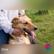 Zena - aktiver Schäferhundmix auf der