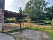 Pensionsplatz Offenstall Hengst Wallach Aufzucht
