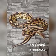 1 0 cinnamon
