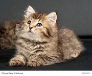 2 Kätzchen suchen ein zuhause