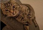 Kater und Katze suchen liebevolles