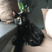 Vermisst Katze Toulouses