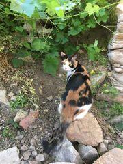Kitty verschmuste Katze ca 11