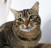 POMPIS - Nette Katzengesellschaft gesucht