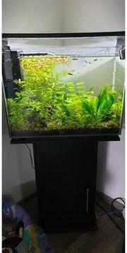Aquarium Aqua Fish Home 80l