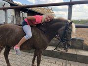 Suche Reitbeteiligung auf Classic Pony