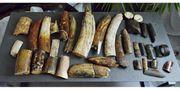 Messergriffmaterial Mammutelfenbein Mammutzahn Fossilien