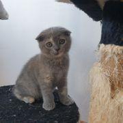 Noch 2 süße Katzenbabys BHK