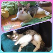 Wunderschöne Katze Maja Irina geimpft