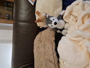 Kleiner chihuahua rüde