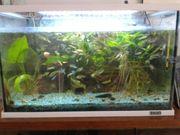 Aquarium 54L TETRA