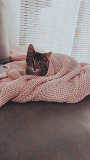 Katzenbaby Kitty 4 Monate