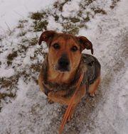 Elza - Traumhund auf 4 Pfoten